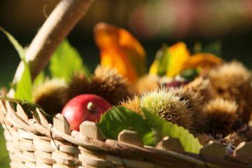 4 idee per vivere l'autunno nei dintorni di Merano e in Val Venosta